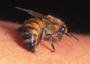 Wasp Nest Removal Bishopbriggs