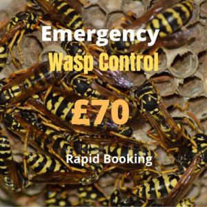 Wasp Nest Removal Dumbarton